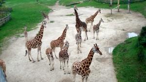 Пражский зоопарк – сделано в природе!